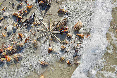 Photograph - Starfish And Sea Shells by David Arment