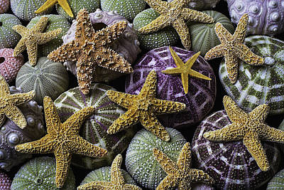 Purple Sea Stars Wall Art - Photograph - Starfish And Sea Urchins by Garry Gay