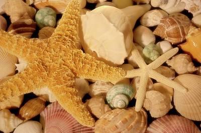 Photograph - Starfish And Seashells by Angie Tirado