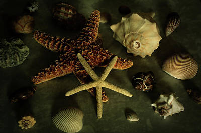 Photograph - Starfish And Seashells Classic Still Life  by Angie Tirado
