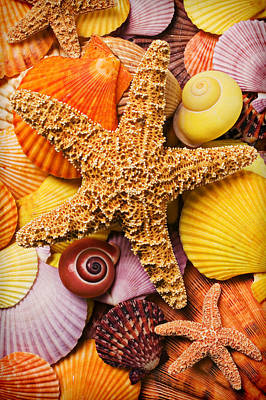 Scallop Photograph - Starfish And Seashells  by Garry Gay