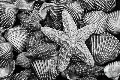 Photograph - Starfish And Shells Black And White by Sharon McConnell