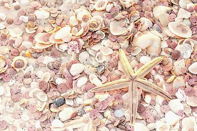 Photograph - Starfish And Shells by Framing Places
