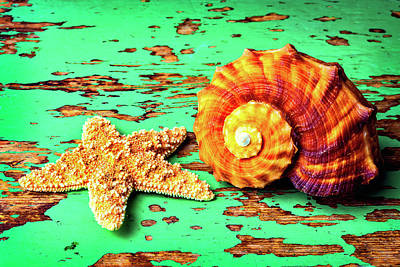 Nature Study Photograph - Starfish And Snail Shell by Garry Gay
