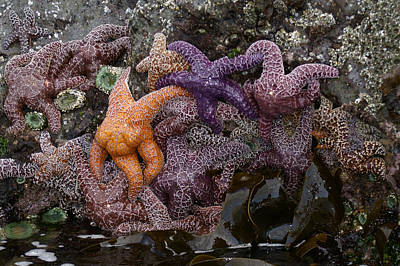 Photograph - Starfish At Cannon Beach by Henri Irizarri