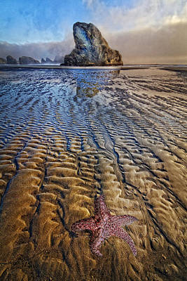 Starfish At Low Tide Art Print
