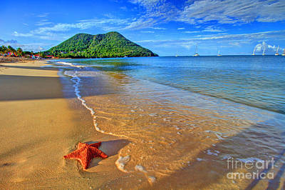 Photograph - Starfish Beach by Scott Mahon
