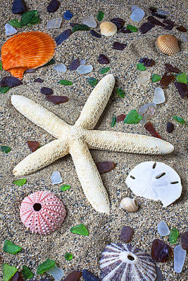 Biology Photograph - Starfish Beach Still Life by Garry Gay