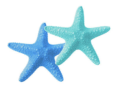 Photograph - Starfish Blue And Turquoise On White by Gill Billington
