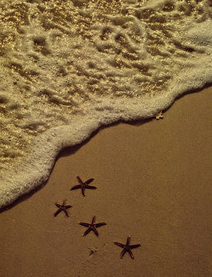 Photograph - Starfish Constellation by Marie Hicks