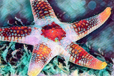 Photograph - Starfish In Bright Colors by Debra and Dave Vanderlaan