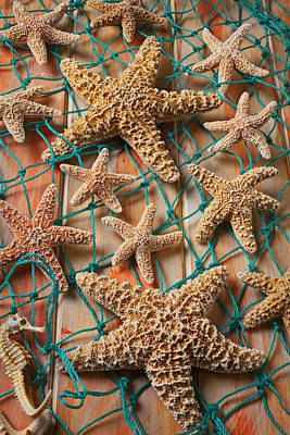 Seahorse Photograph - Starfish In Net by Garry Gay