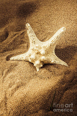 Photograph - Starfish In Sand by Jorgo Photography - Wall Art Gallery