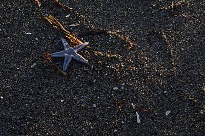 Starfish Original
