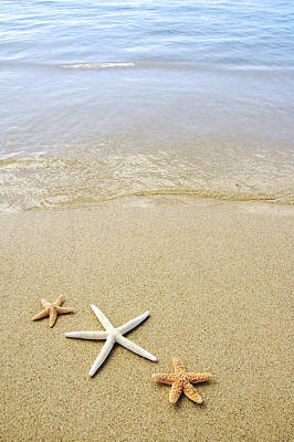 Photograph - Starfish On Beach by Mary Van de Ven - Printscapes