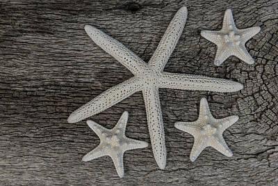 Photograph - Starfish On Driftwood by Randy Walton