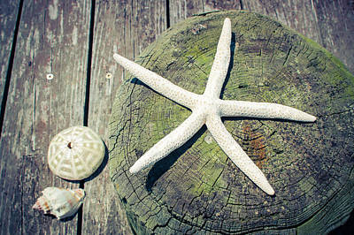 Starfish On Old Wood Dock Art Print by Colleen Kammerer