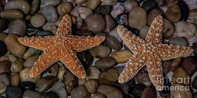 Photograph - Starfish On Rocks by Scott Hervieux