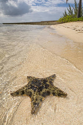 Caribbean House Photograph - Starfish On The Beach At Starfish Point by Adam Romanowicz