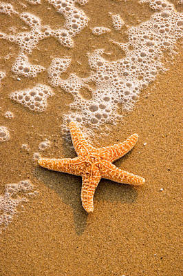 Photograph - Starfish On The Beach by Douglas Pulsipher