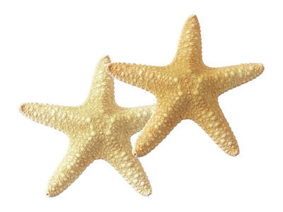 Photograph - Starfish On White by Gill Billington