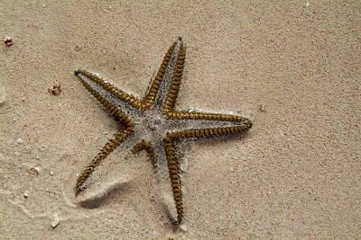 Starfish Partially Buried In White Sand Art Print