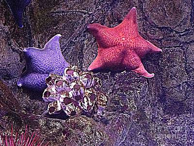 Photograph - Starfish Pink Starfish Blue by Richard W Linford
