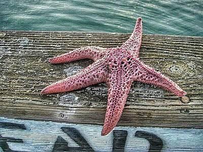 California Photograph - Starfish by Ross Kestin