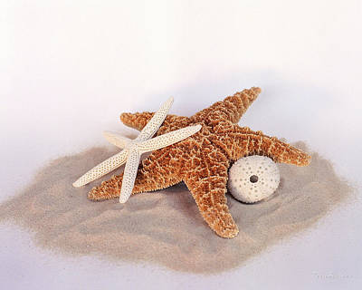 Photograph - Starfish Still Life by Terri Harper