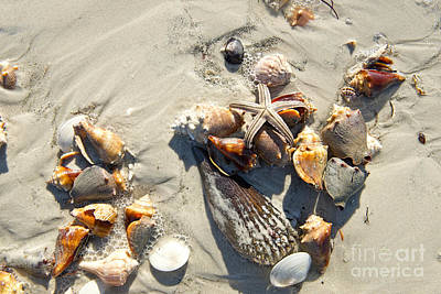 Photograph - Starfish With Five Points On Sea Shells by David Arment