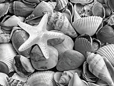 Photograph - Starfish With Shells And Pebbles Mono by Gill Billington