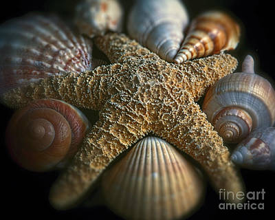Starfish With Various Seashells Art Print by George Oze