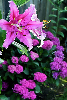 Photograph - Stargazer And Hydrangea by Mick Anderson