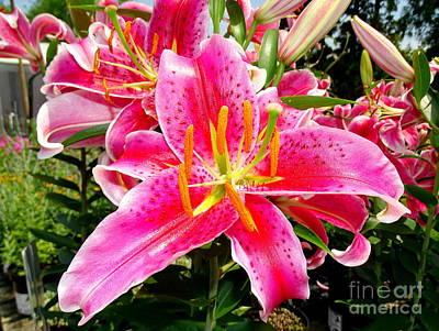 Photograph - Stargazer Lilies #4 by Ed Weidman