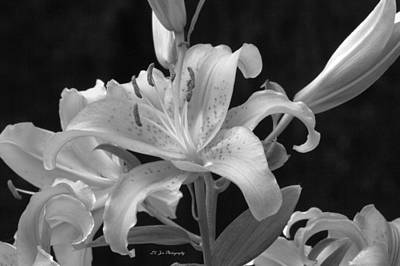 Photograph - Stargazer Lilies In Black And White by Jeanette C Landstrom
