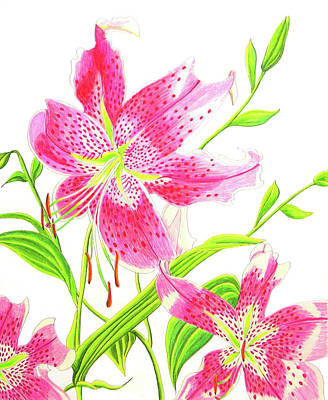 Primitive Drawing - Stargazer Lily #3 by Laura Wilson