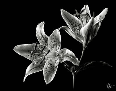 Stargazer Lily In Black And White Art Print
