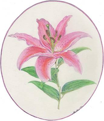 Drawing - Stargazer Lily by Joanna Aud