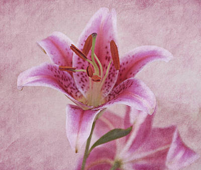 Photograph - Stargazer Lily by Sandy Keeton