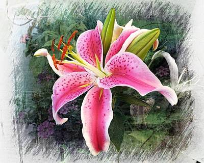 Photograph - Stargazer Oriental Lily by Joe Duket