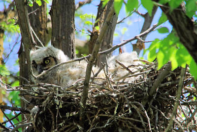 Baby Bird Photograph - Staring From Its Nest by Jeff Swan
