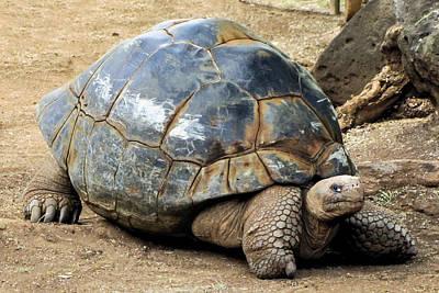 Photograph - Staring Graffiti Tortoise by Bob Slitzan
