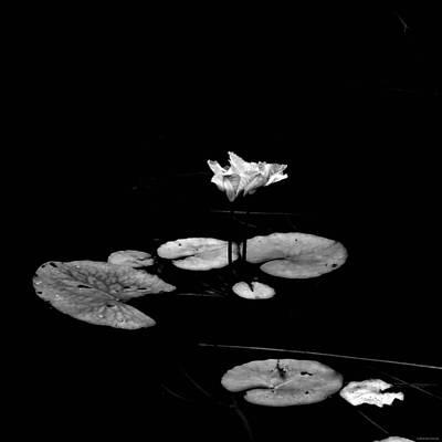 Photograph - Stark by Brenda Conrad
