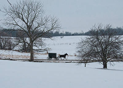 Amish Photograph - Stark Winter Buggy by David Arment