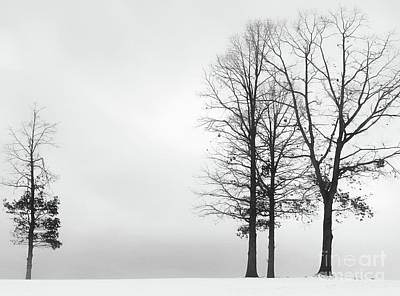 Photograph - Stark Winter Day  by Benanne Stiens