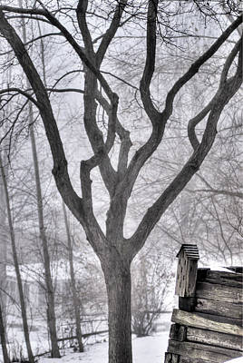 Stark Winter Images Art Print by Don Wolf