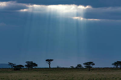 Photograph -  Masai Mara Sunrays  by Aidan Moran
