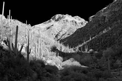 Photograph - Starlight by Scott Rackers