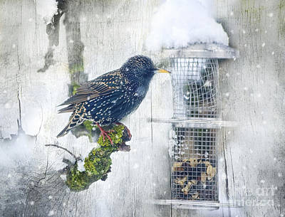 Feed Digital Art - Starling Meets Snowflakes by Jutta Maria Pusl