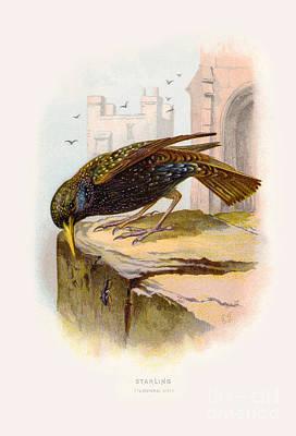 Grimm Fairy Tales - Starling Restored by Pablo Avanzini